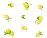 Rrwater_color_lemons_thumb