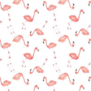 Flamingos scattered