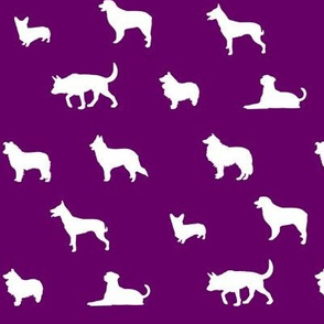 Sheepdogs Fushia