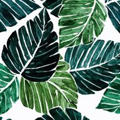 Monstera_leaves-90-degrees-rev_shop_thumb