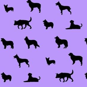 Sheepdogs Light Purple and black