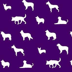 Sheepdogs Purple
