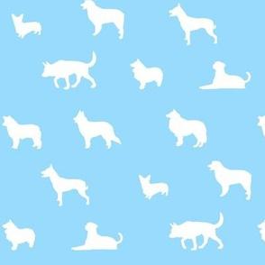 Sheepdogs SkyBlue