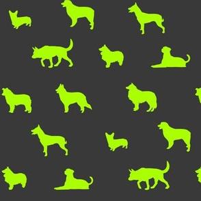 Sheepdogs Green on Grey