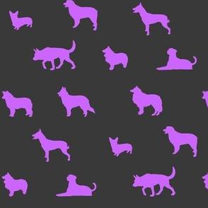 Sheepdogs Purple on Grey