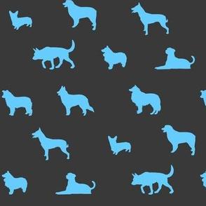 Sheepdogs SkyBlue on Grey