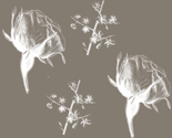 Rtaupe_flowers_and_stems_2_thumb