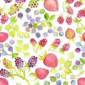 Rsummer_berries_6_shop_thumb