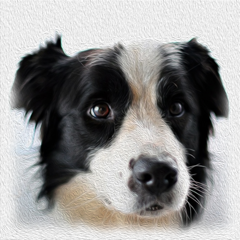 boarder collie - dog - painted fabric by stofftoy on Spoonflower - custom fabric