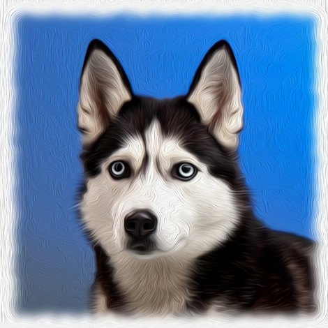 husky - painted fabric by stofftoy on Spoonflower - custom fabric