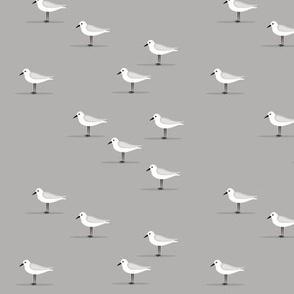 sandpiper - grey