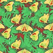 Rasta Butterflies