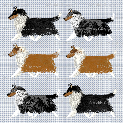Rough Collies on a Blue Checker Background