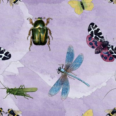 watercolour_insects