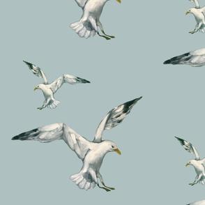 Seagull Skies