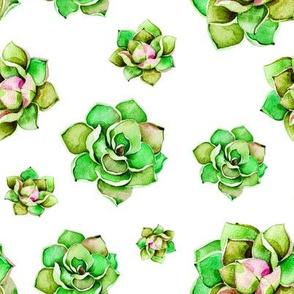 """8"""" Happy Day Cactus / White"""