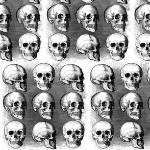 Savvy's gray skulls