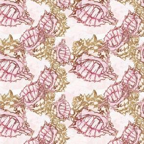 CC-pink-murex