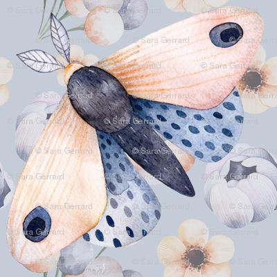 Soaring Moths
