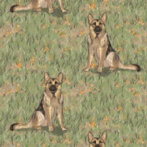Sitting German Shepherd Dog in Orange Wildflowers