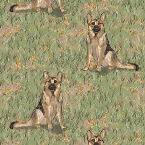 Sitting German Shepherd Dog in Orange Wildflowers