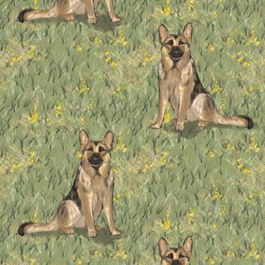Sitting German Shepherd Dog in Yellow Wildflowers