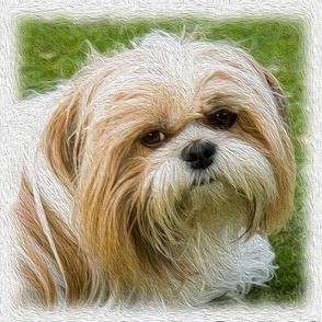 shih tzu - painted