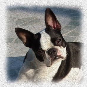 boston terrier - painted