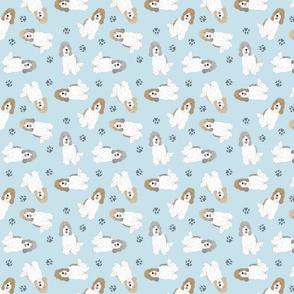 Tiny Petit Basset Griffon Vendeen - blue