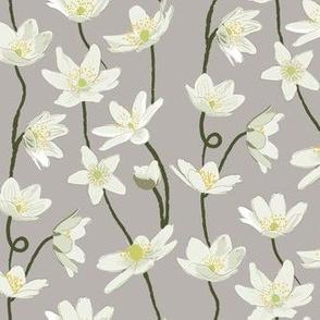 Anemone - Grey