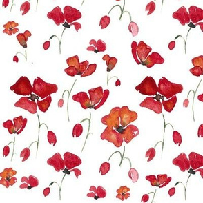 Red Swedish Poppies