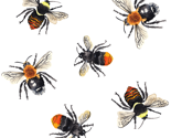 Bee_scatter_thumb