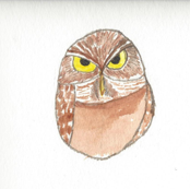 You did What! says Burrowing Owl