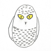 """""""I see you"""", says the snowy owl"""