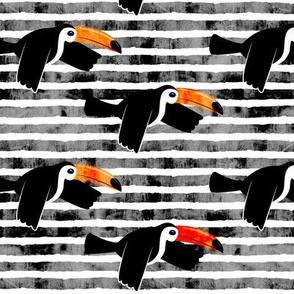toucan - grey