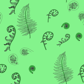 Fiddleheads and Ferns