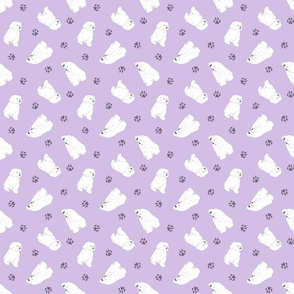 Tiny Maltese - purple