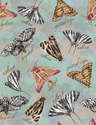 Insect_Safari