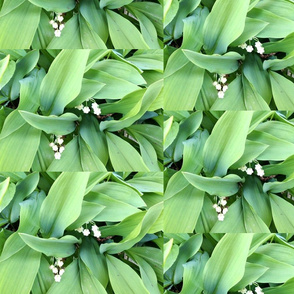 Lilies of the Valley 2-ed