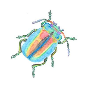 Rainbow Beetle Watercolor Medium