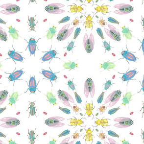 Rinsectos_shop_thumb