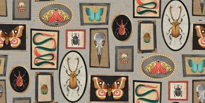 specimens repeat