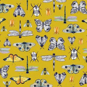 Insectopia Mustard