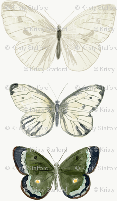 butterflys Green