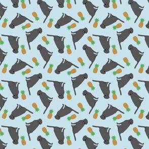 Tiny Black Labrador Retrievers - pineapples
