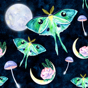Luna moth butterfly and fullmoon night