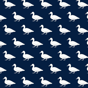 duck on navy