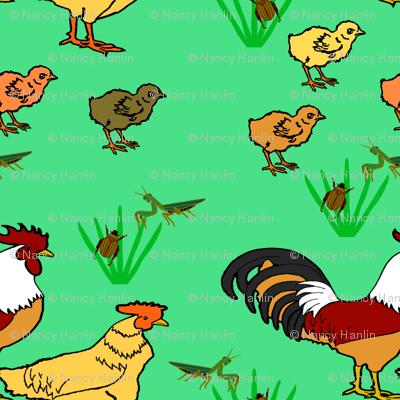 ChickenFamilyBlGr