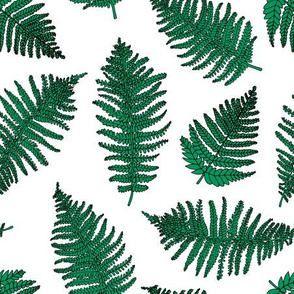 Botanical summer garden green fern tropical plant white green