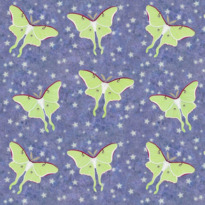 luna moths on violet